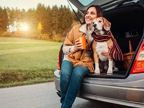 Can I take my dog in a hire car?